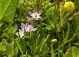 Moeras - en waterflora
