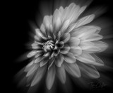 Flowers, Macro, & Abstract:  Click image to open gallery