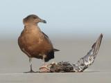 Database  Birds: A - G