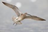 Database Birds: N - S