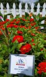 Scarlet zinnias