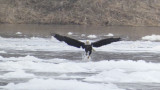 eagle_water_2.jpg