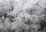 Freezing Fog, Mountain Lake Hotel And Resort, Giles County, Virginia