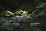 Scattered Mid Day Light On A Pisgah National Forest Mountain Stream.