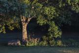 Late Summer Evening Light In My Backyard