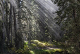 Mountain Light Rays On Owl Creek Pass Near Ouray,  Colorado