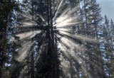 A Walk In The Woods, Enjoying The Light:  Near Ouray, Colorado