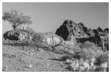 Mid Morning In The Sonoran Desert, Arizona