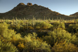 Late Light At Organ Pipe National Monument, Arizona