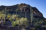 Organ Pipe National Monument, Arizona