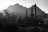 Sunrise In Organ Pipe National Monument, Arizona