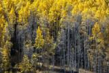 A San Juan Byway Fall Palette, Colorado