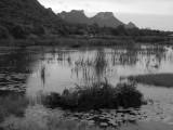 marsh land.jpg