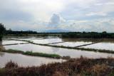 flooded fields.jpg