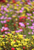 multi-floral.jpg