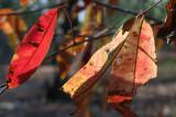 dry season foliage.jpg