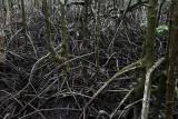 mangrove density.jpg