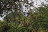 wooded.jpg