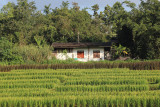 house and rice.jpg