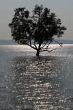 sea tree.jpg