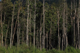 woods edge.jpg
