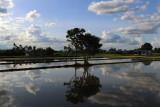 flooded paddies.jpg