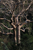 trunk and branches.jpg