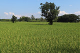 the main crop.jpg