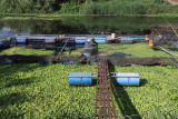 aquatic cultivation.jpg