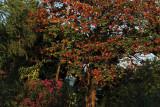 tropical foliage.jpg