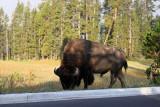 1710 - Grand Teton and Yellowstone NP road trip 2019 - IMG_3549 DxO pbase.jpg
