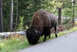 1745 - Grand Teton and Yellowstone NP road trip 2019 - IMG_3589 DxO pbase.jpg