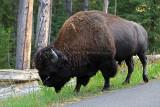 1746 - Grand Teton and Yellowstone NP road trip 2019 - IMG_3590 DxO pbase.jpg