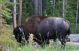 1749 - Grand Teton and Yellowstone NP road trip 2019 - IMG_3593 DxO pbase.jpg