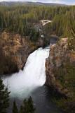 1761 - Grand Teton and Yellowstone NP road trip 2019 - IMG_3605 DxO pbase.jpg