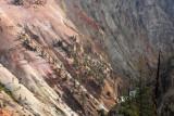 1809 - Grand Teton and Yellowstone NP road trip 2019 - IMG_3664 DxO pbase.jpg