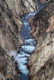 1825 - Grand Teton and Yellowstone NP road trip 2019 - IMG_3681 DxO pbase.jpg