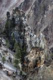 1868 - Grand Teton and Yellowstone NP road trip 2019 - IMG_3727 DxO pbase.jpg