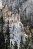 1870 - Grand Teton and Yellowstone NP road trip 2019 - IMG_3729 DxO pbase.jpg