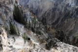 1899 - Grand Teton and Yellowstone NP road trip 2019 - IMG_3770 DxO pbase.jpg