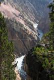 1921 - Grand Teton and Yellowstone NP road trip 2019 - IMG_3793 DxO pbase.jpg