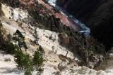 1925 - Grand Teton and Yellowstone NP road trip 2019 - IMG_3796 DxO pbase.jpg