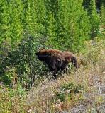 1991 - Grand Teton and Yellowstone NP road trip 2019 - 20190830_102824 DxO pbase.jpg