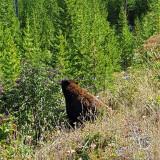 1993 - Grand Teton and Yellowstone NP road trip 2019 - 20190830_102833 DxO pbase.jpg