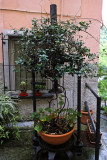 1336 D'couverte des Cinque Terre - IMG_4205_DxO Pbase.jpg