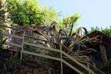 1356 D'couverte des Cinque Terre - IMG_4227_DxO Pbase.jpg