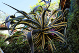 1359 D'couverte des Cinque Terre - IMG_4230_DxO Pbase.jpg