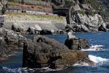 1498 D'couverte des Cinque Terre - IMG_4393_DxO Pbase.jpg
