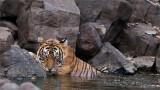 Tigress Noor - Meeting if the Minds!