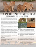 Experience Africa